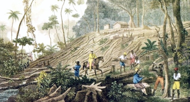 colonization of brazil The first european to land in brazil was the portuguese explorer pedro alvarez cabral, in 1500 the region received its name from the pau-brasil, a wood brought back.