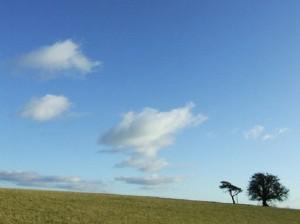 Trees - (c) Hich Yezza
